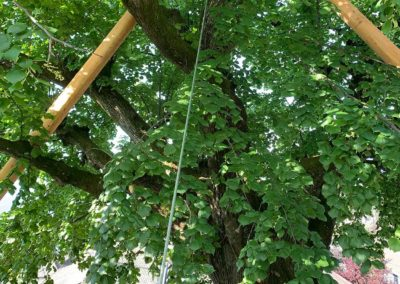 Travaux d'haubanage d'un arbre à Lausanne avec un système d'ancrage