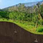 Illustration de l'ancrage d'un filet de protection des vignes avec le système d'ancrage au sol Platipus